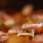 priroda_houbicka1