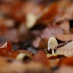 priroda_houbicka3